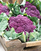 Purple cauliflowers on a wooden tray