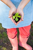 A woman holding a young vegetable plant