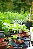 Assorted seedlings and pot plants in the garden