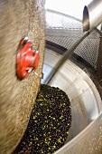 Olives being pressed