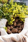 Organic potatoes and fresh dill at the market