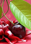A cherry with leaf