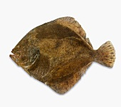 A fresh turbot against a white background