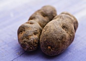 Two Vitelotte potatoes