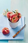 Peaches in a bowl with peach blossom