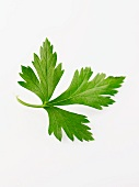 A parsley leaf