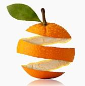 Studio Shot of orange peel