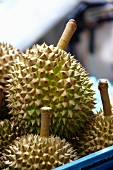 Durian fruit in a blue container