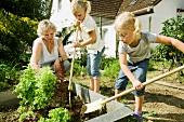 Grossmutter und Kinder arbeiten im Gemüsegarten