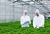 Germany, Bavaria, Munich, Scientists in greenhouse examining parsley plant