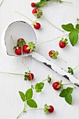 Wild strawberries and mint leaves with ladle