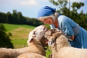 Germany, Bavaria, Mature woman playing with sheep on farm
