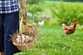 Junge mit Eierkorb und Hühnern auf dem Bauernhof