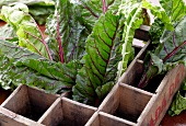 Fresh Swiss Chard in Divided Wooden Crate