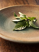 Fresh Basil on a Ceramic Plate