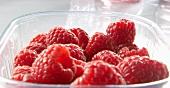 Lots of raspberries in a plastic pot