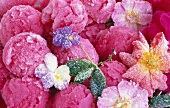 Lots of scoops of rose blossom sorbet with candied edible flowers and mint leaves