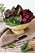 Assorted types of radicchio in a colander