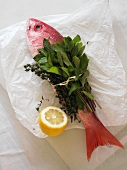 Whole Fresh Red Snapper Tied with Mint and Thyme; Lemon