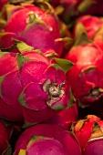 Many Dragon Fruit; Close Up