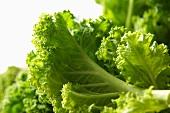Kale (close-up)
