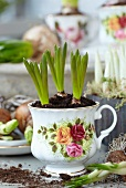 Traubenhyazinthen in einer romantischen Teetasse