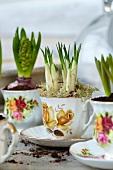 Krokusse und Hyazinthen in romantischen Teetassen