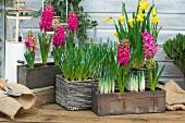 Verschiedene Frühlingsblumen in Pflanzkisten auf der Terrasse
