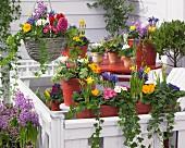 Bunte Frühlingsblumen in Töpfen und Blumenampel auf der Terrasse
