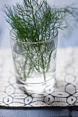 Fresh dill in a glass of water