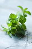 Fresh mint with cord
