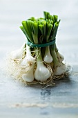 A bunch of spring onions secured with a rubber band