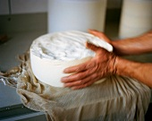 Hands Working with Urner Alpkäse (Swiss) Cheese