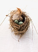 Quail's eggs, marzipan eggs and a feather in an Easter nest