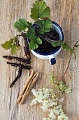 A still life featuring meadowsweet, colewort and a cinnamon stick