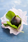 Fresh figs with a leaf on paper