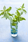 Fresh lemon verbena in a glass of water