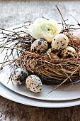 Quail's eggs in a nest with a spring flower