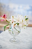 Peruvian Lilies in a Glass Vase on a Marble Table