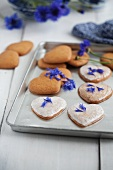 Heart-shaped cinnamon biscuits with sugar glaze and cornflower petals on a baking tray