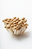 Buna Shimeji Mushrooms on a White Background