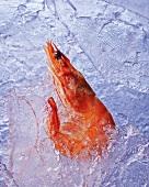 A frozen prawn