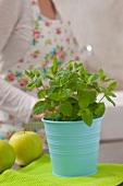 Frische Minze im Blumentopf und ein grüner Apfel, Frau im Hintergrund