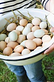 Person Holding a Large Bowl of Freshly Gathered Free Range Organic Farm Fresh Eggs