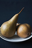 Two Bosc Pears on a White Plate; Black Background
