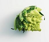 A Romanesco cauliflower lying on its side
