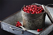 Cranberries in a tin bucket