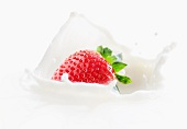 A splash of milk as a strawberry falls into milk