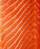 Raw salmon fillet (full frame)