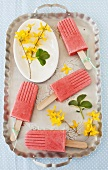 Strawberry smoothie ice lollies on a tray with forsythia flowers